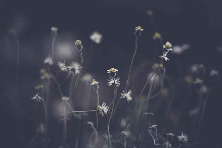 beautiful bloom blooming blur