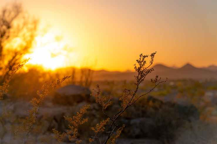 macro photography of yellow flowers during sunset