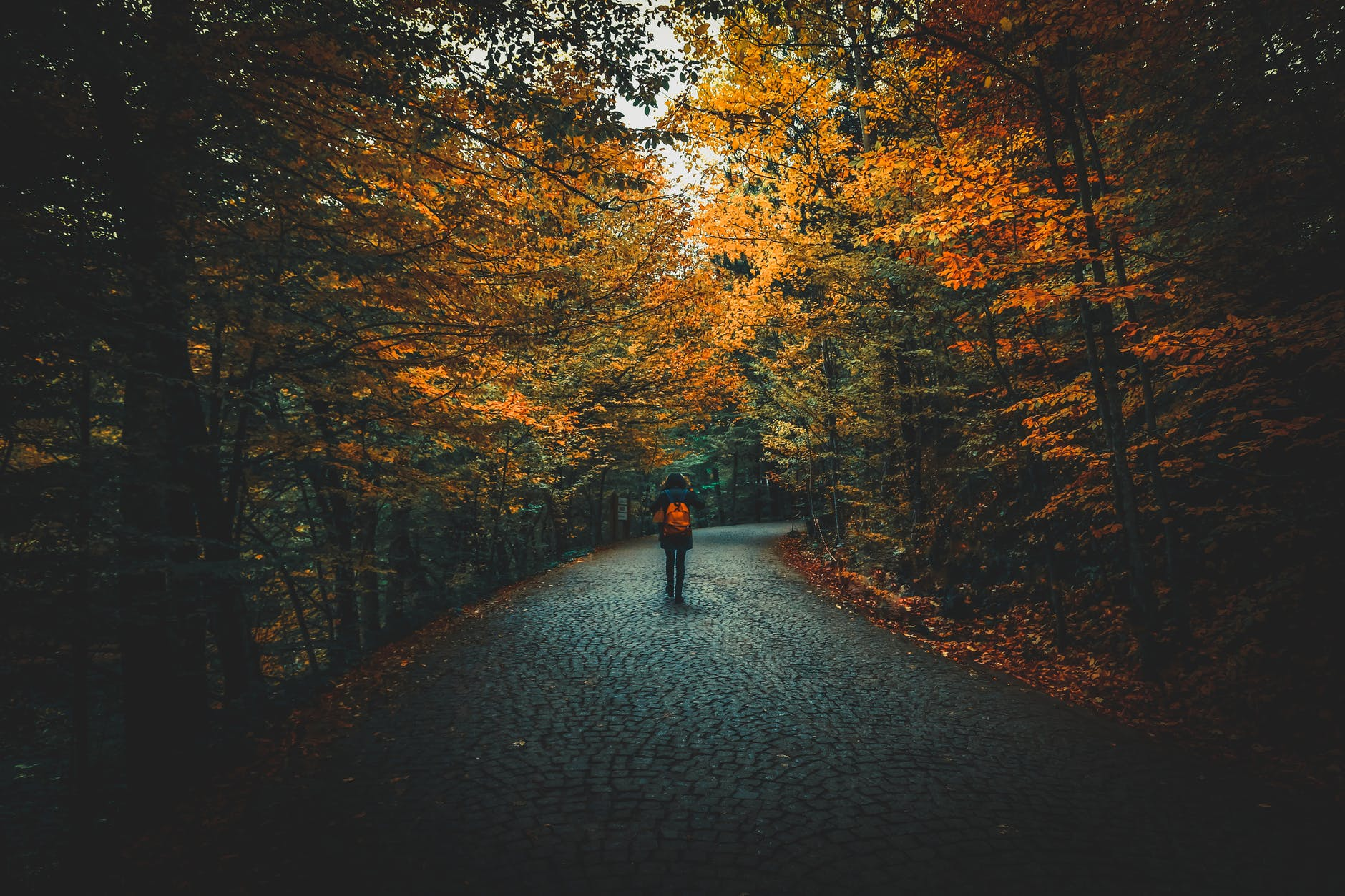 man walking on road with orange bag surrounded by trees